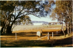 stock Horse in safe refuge paddock